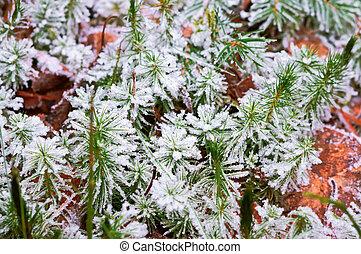 little snow on moss, hoarfrost on green lichen