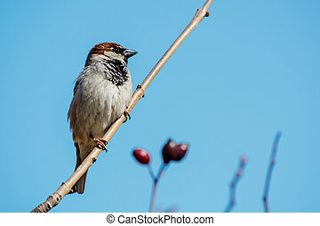Little sparrow sitting on a tree branch