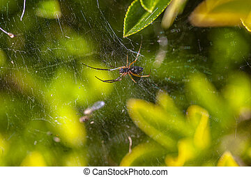 Little spider in nature immersed in laves at spring, Image taken with macro lens