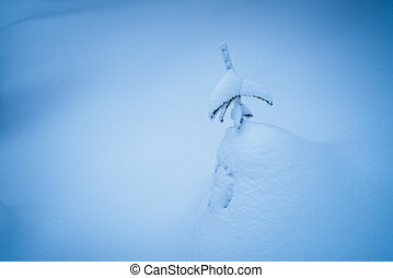 Little spruce under snow