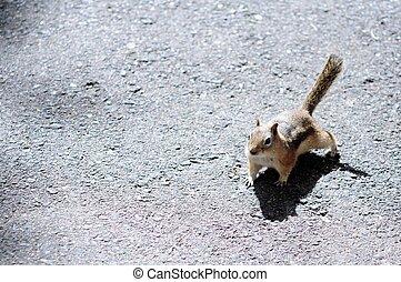 Little Squirrel - Little Cute Squirrel