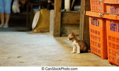 Little stray kitten sitting on the ground at night street...