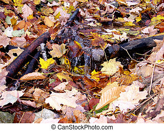Little stream covered of leaves with the colors of fall-Stock Photos