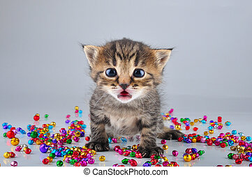 Little surprised funny kitten with small metal jingle bells...
