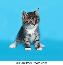 Little tabby and white kitten standing on blue
