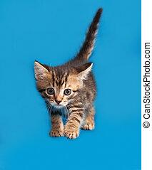 Little tabby kitten goes on blue