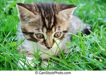 little tabby kitten on the grass in the garden