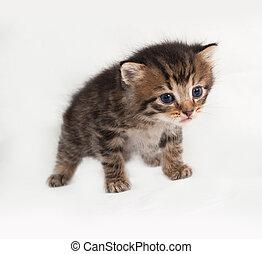 Little tabby kitten standing on gray
