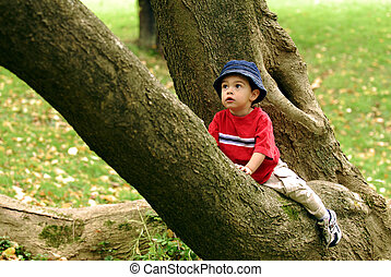 Little Tree Climber - Two year-old contemplating his next...