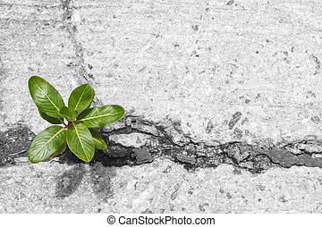 Little tree growing from cracked concrete