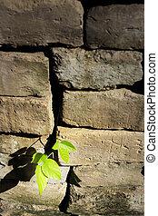 little tree on old bricks wall