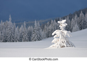 Little tree under snow