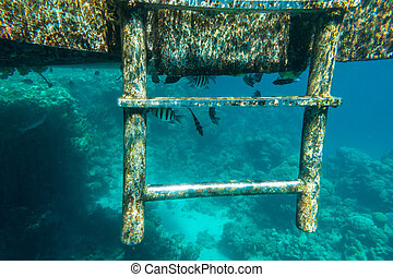 Little tropical fish living under pontoon in sea - Little...