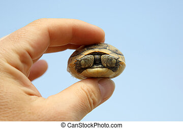 little turtle in a man's hand