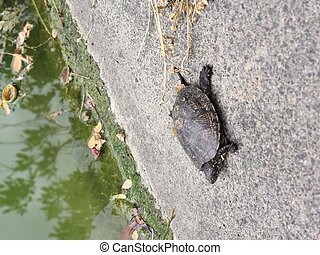 little turtle near the lake in the park