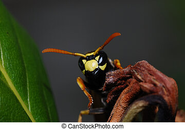 wasp looks into the camera