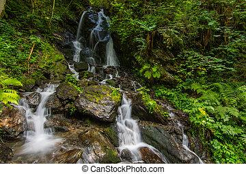 little waterfalls in a green forest