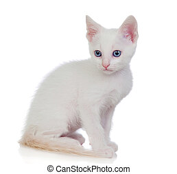 Little white cat with blue eyes