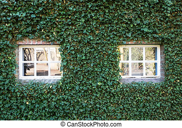 Little white cozy window with green ivy on the wall of a building