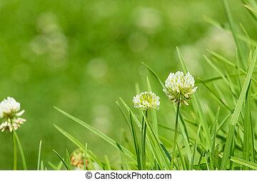 little white flower on green grass background