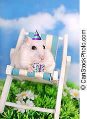 white hamster celebrating birthday - little white hamster...