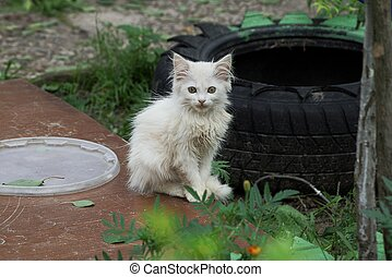 little white kitten sitting on a brown plank in the grass