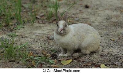 Little White Rabbit Feeds - Little white baby rabbit feeds...