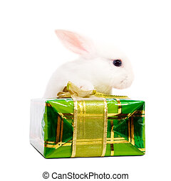 rabbit with present box