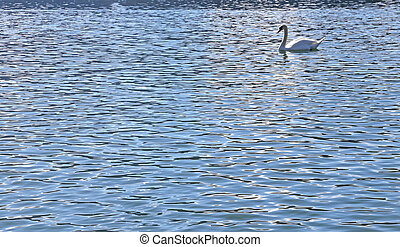 White Swan swimming in the water