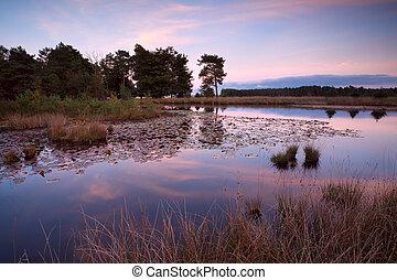 little wild pond at sunset