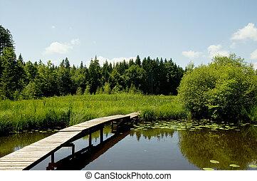 bridge at a lake