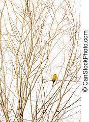Little yellow bird sitting on branch