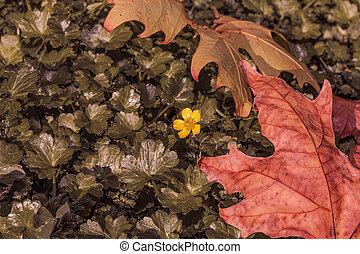 little yellow flower on the grass