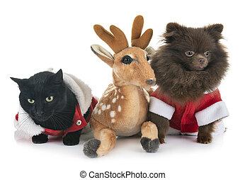 littles, 개, 와..., 고양이