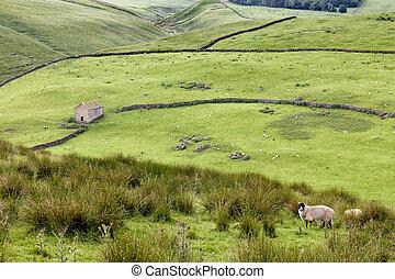 littondale, valles, darnbrook, colinas, yorkshire