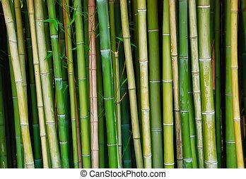 Live bamboo tree trunks - Live green bamboo tree trunks