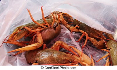 Live crayfish in plastic bag - Live crayfish in a plastic...