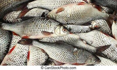 Live fish full basket - Live fish successful fishing full...