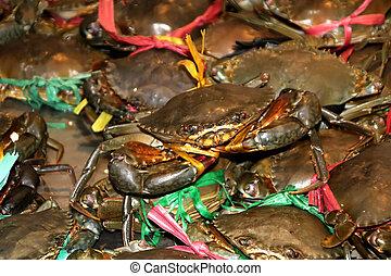 Live freshwater crabs sold in Phnom Penh market
