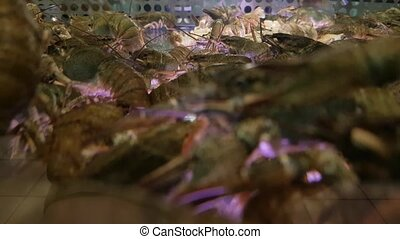 Live lobsters for sale in the seafood shop