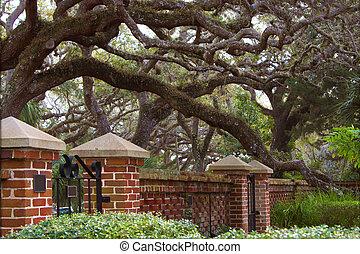 Beautiful old live oak in formal garden