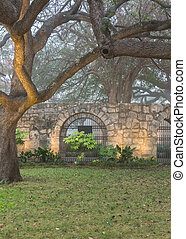 Live Oak Trees and Spanish Mission Wall