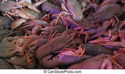 Live Red Crayfish On The Counter Fish Market. Seafood...