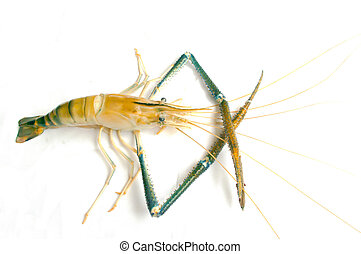 Live Shrimp isolate white background