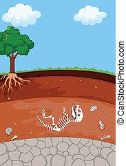 livelli, suolo, fossile, dinosauro