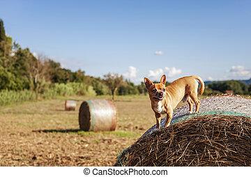 Puppy on big hay bale