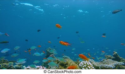 Lively coral reef edge with a lot of colorful fish. Coral ...