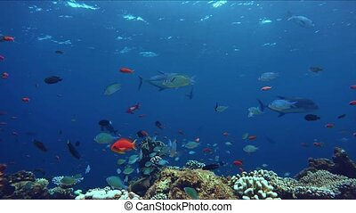 Lively coral reef teeming with life - Lively coral reef with...