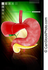 Liver and Stomach - Digital illustration of Liver and ...
