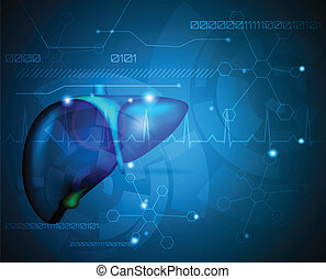 Liver, medical wallpaper - Liver. Illustration of human...